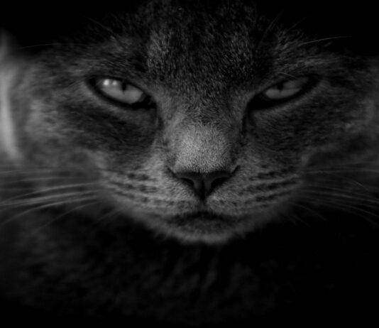 gatti arrabbiatissimi