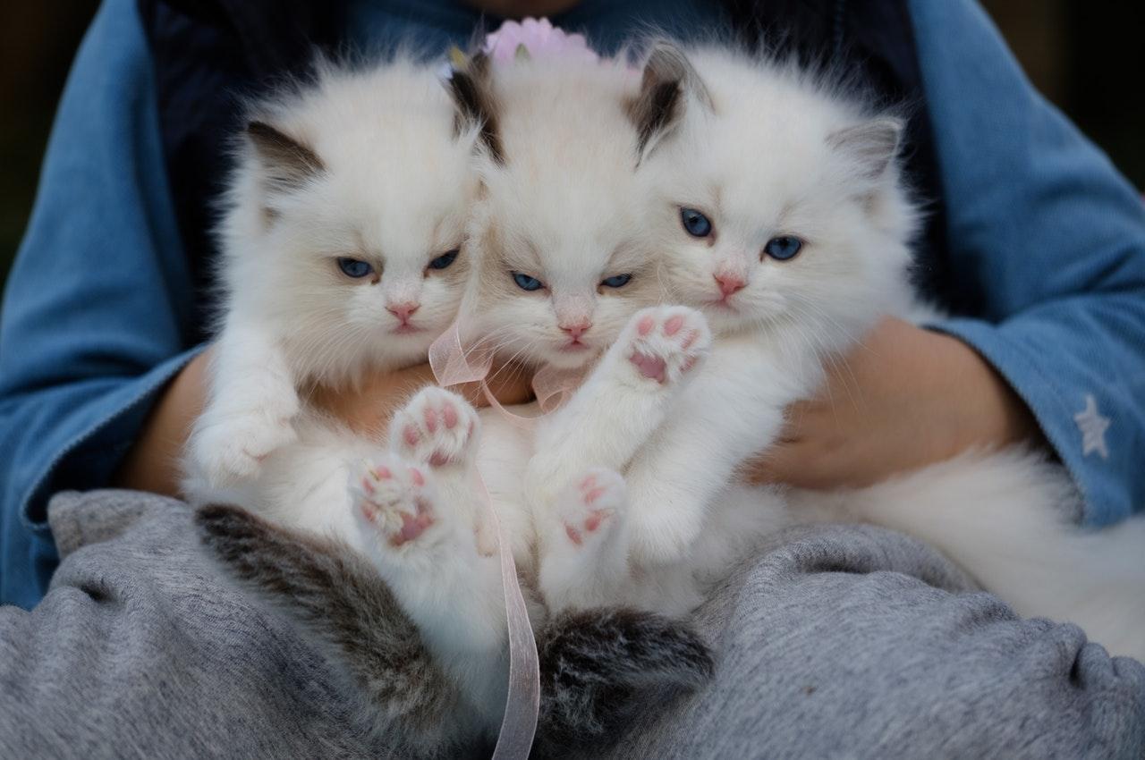 gatti-insieme