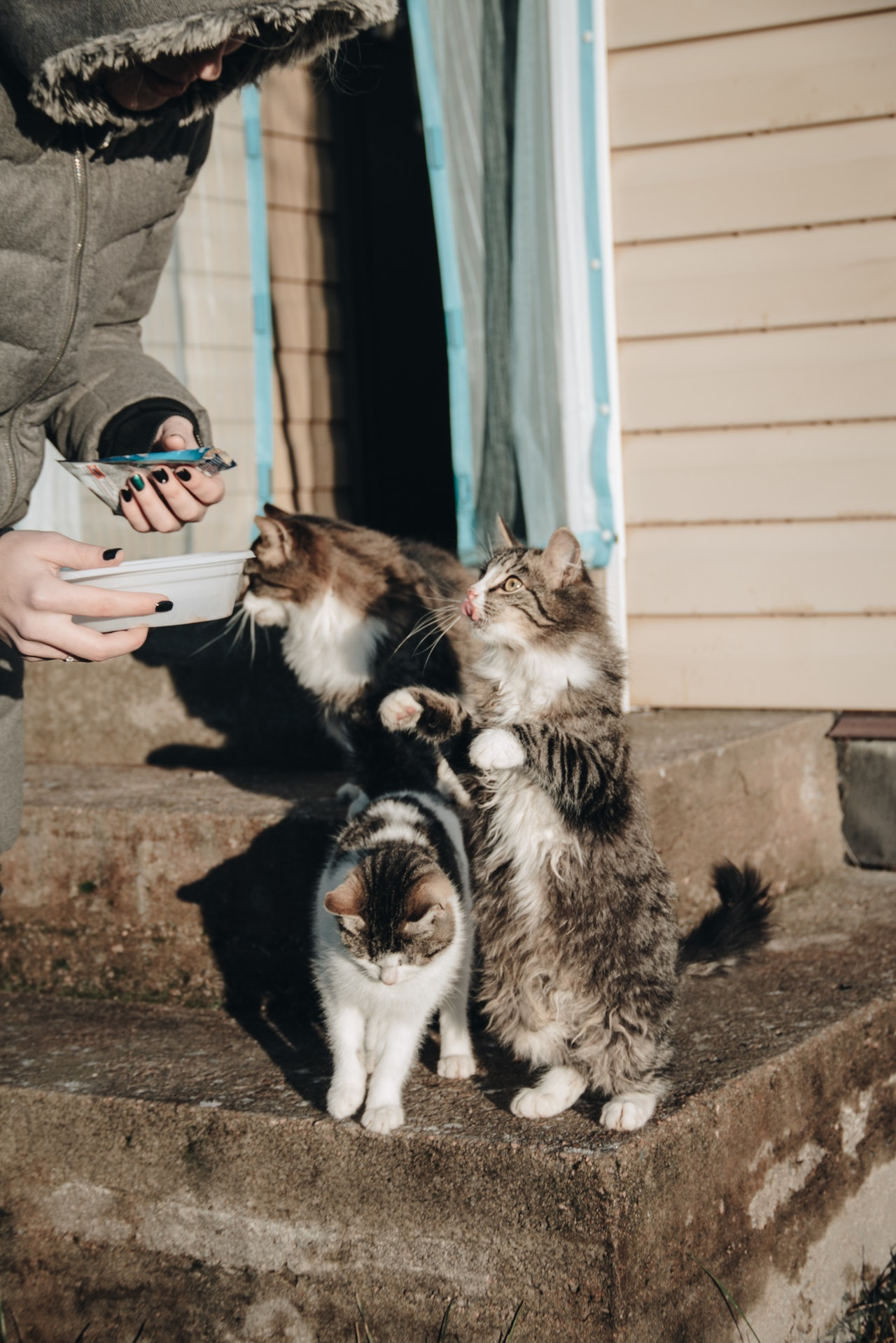 gatti-mangiano
