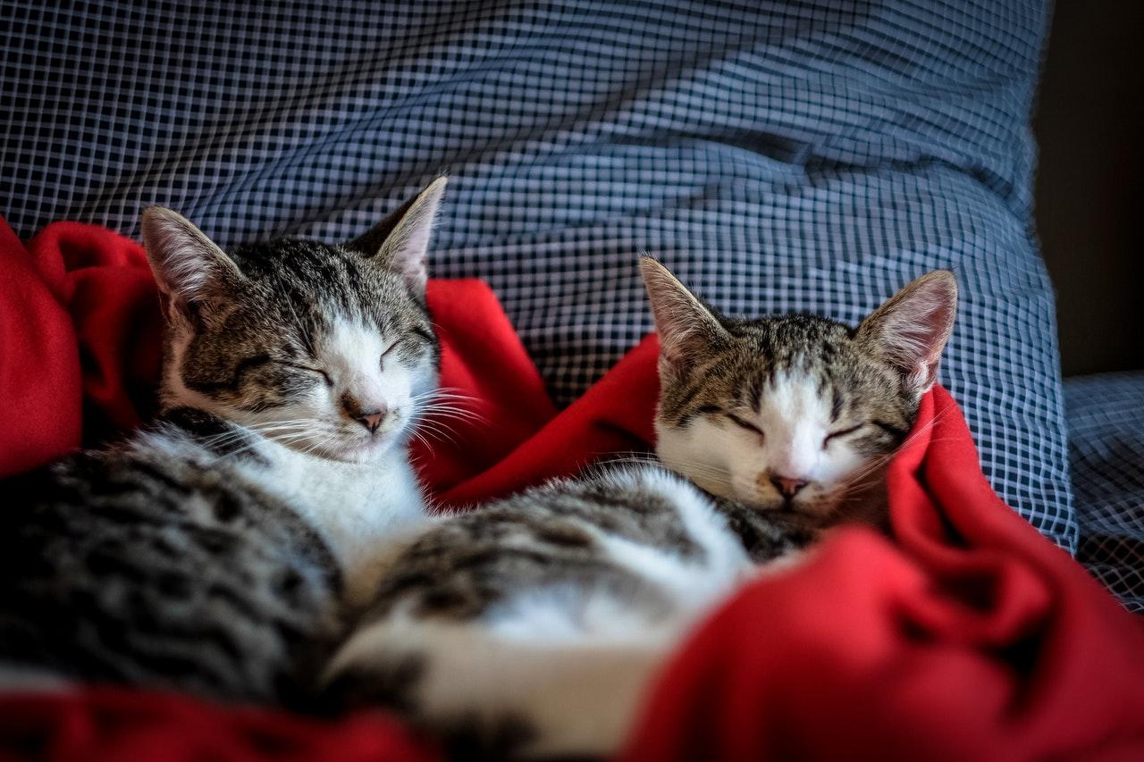 gatti-vivono-insieme
