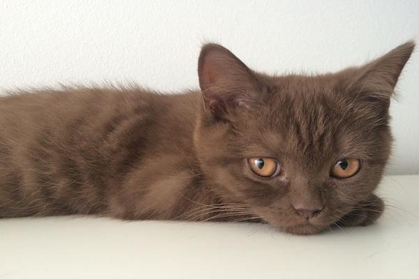 gatto apre gli occhi