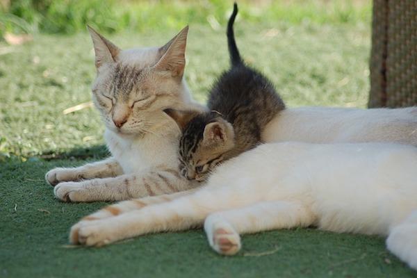gatto e sua mamma