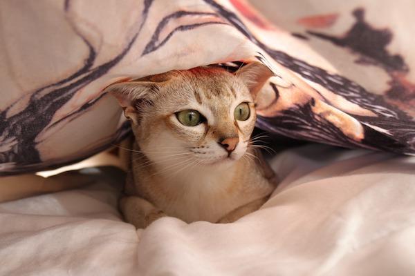 gatto sotto un lenzuolo