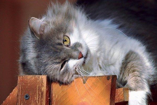 gatto adulto non usa lettiera