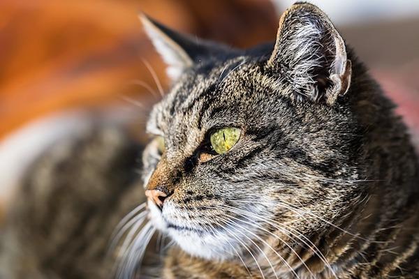 gatto occhioni