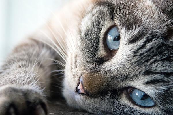 gatto cerca coccole