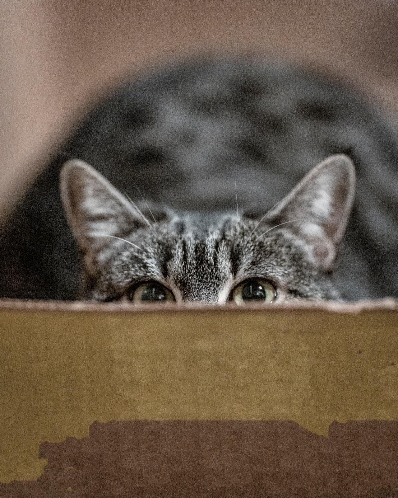 gatto-cibo