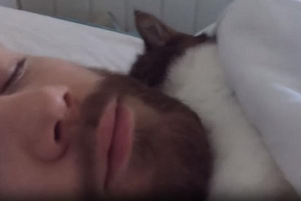 gatto abbracciato al papà umano