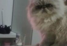 gatto guarda la padrona prima di buttare dal tavolo una candela