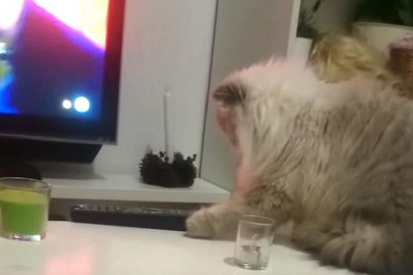 gatto fa cadere telecomando