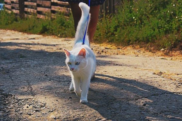 gatto cammina per strada