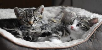 gattini piccoli e dolci