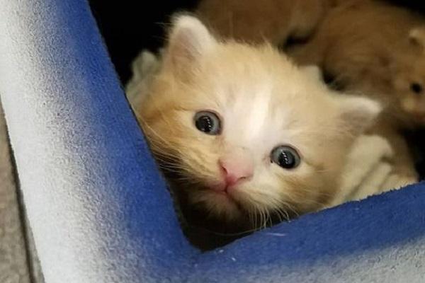 gattino dentro lettiera