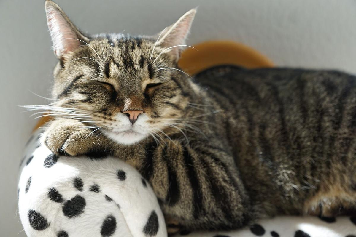 gatto soriano dorme