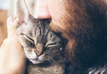 gatto affettuoso con padrone