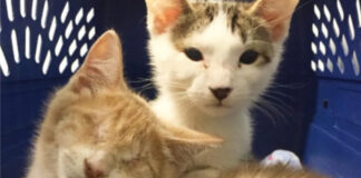 Bop-il-gattino-cieco-che-e-rinato-grazie-ai-suoi-angeli-custodi-il-video3