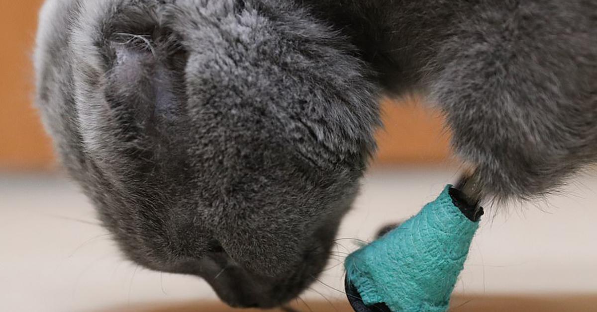 Gatto con le protesi