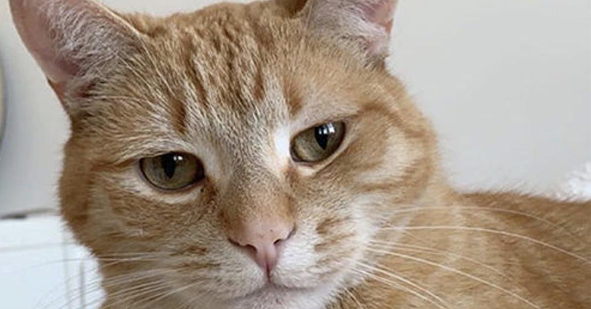 Ed-il-gattino-protagonista-di-una-danza-che-lo-ha-reso-famoso-il-video1
