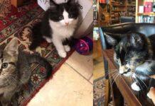 Gattini in libreria