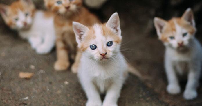 Gattini randagi