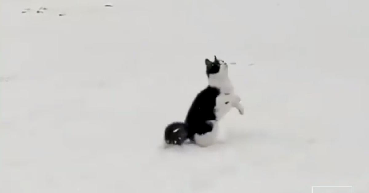Gattino nella neve