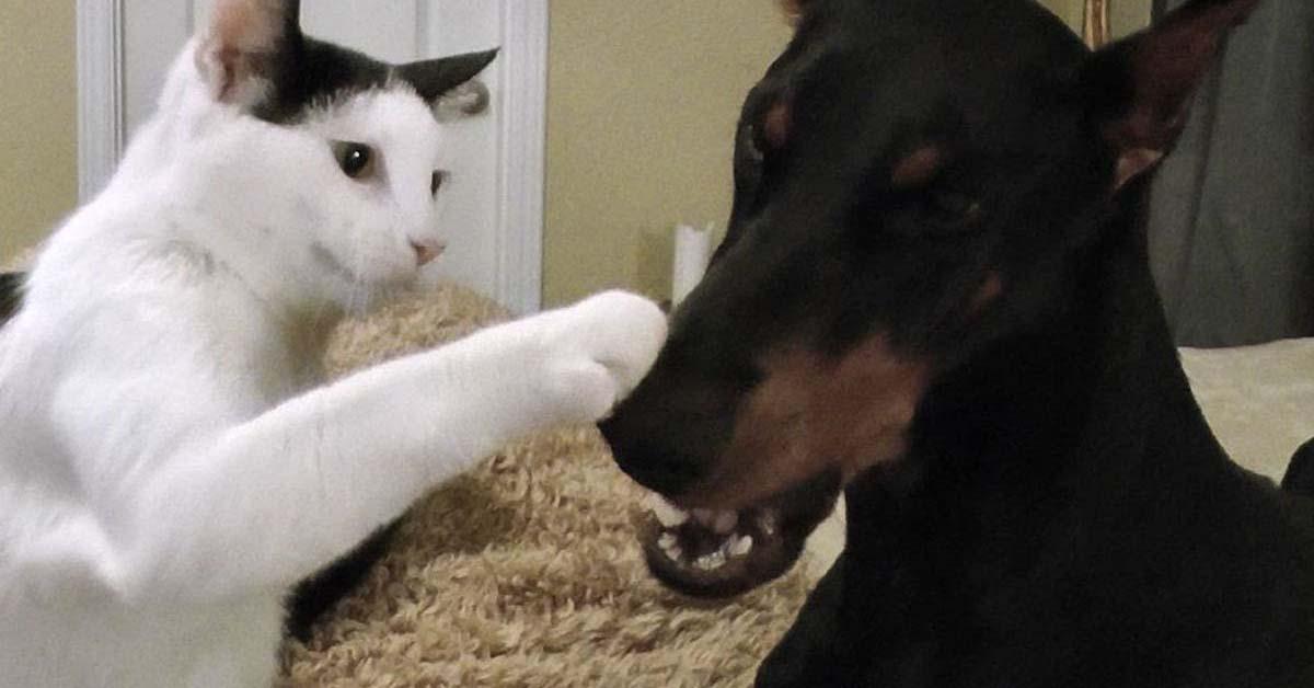 Gattino che gioca con un cane