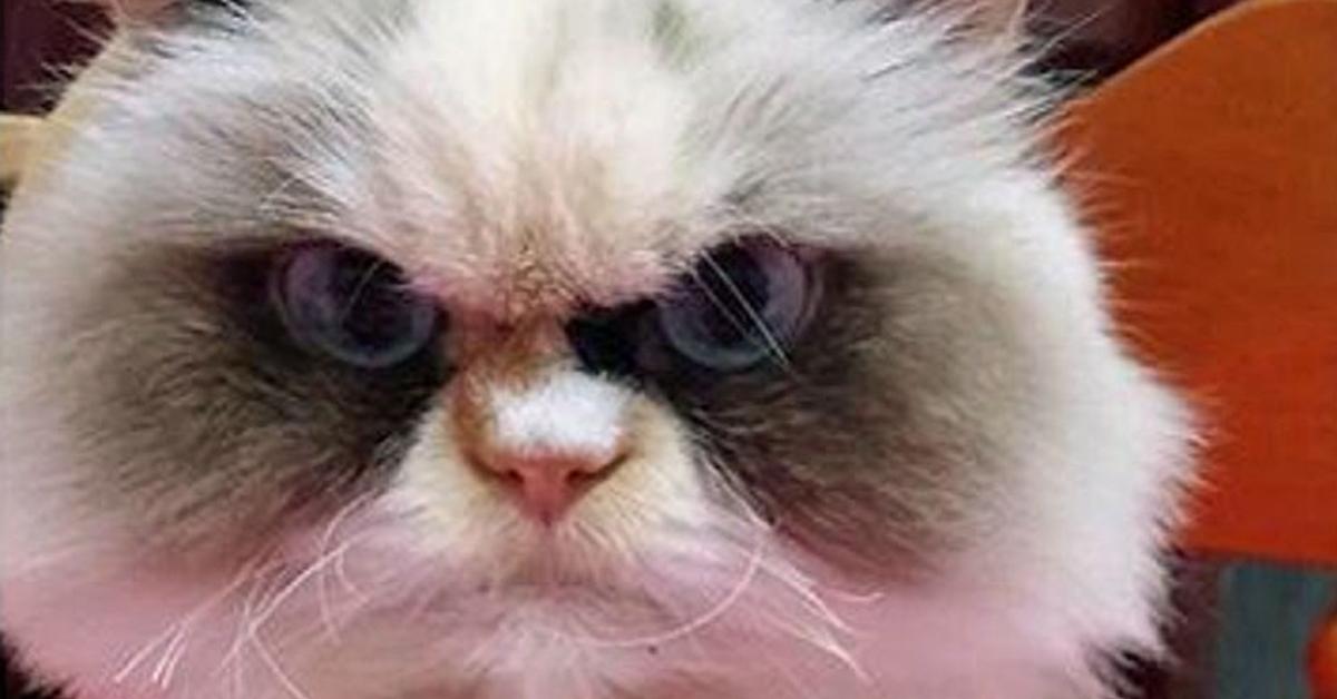 Gatto che guarda arrabbiato