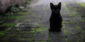 Gattino nero seduto