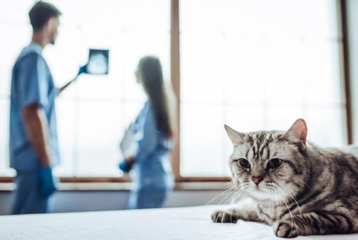 gatto malato ricoverato