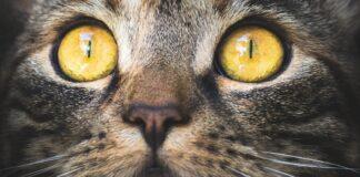 Sguardo gatto