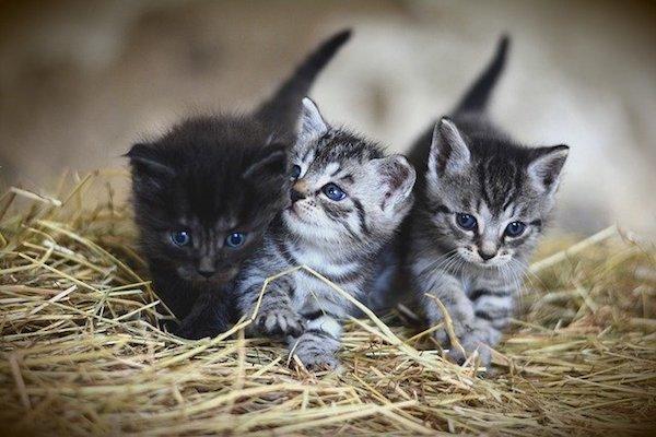 comportamento dei gattini