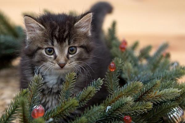 gattino cucciolo esplora mondo