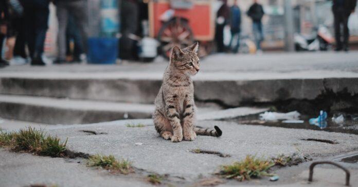 Gatto per strada