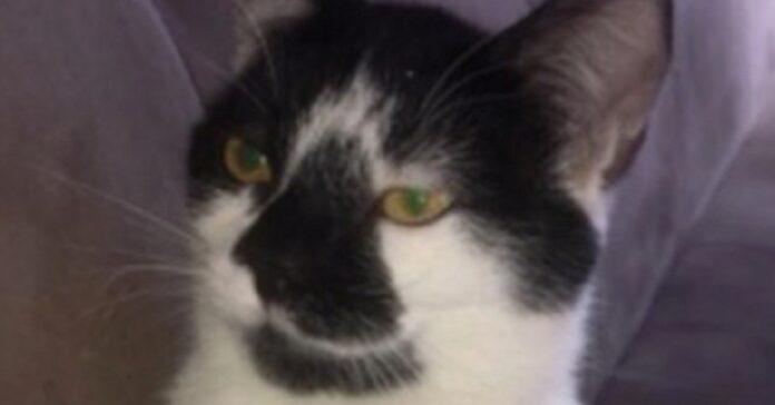 gatta uccisa in provincia di varese