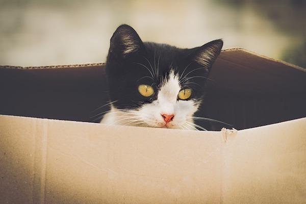 gatto con scatolone