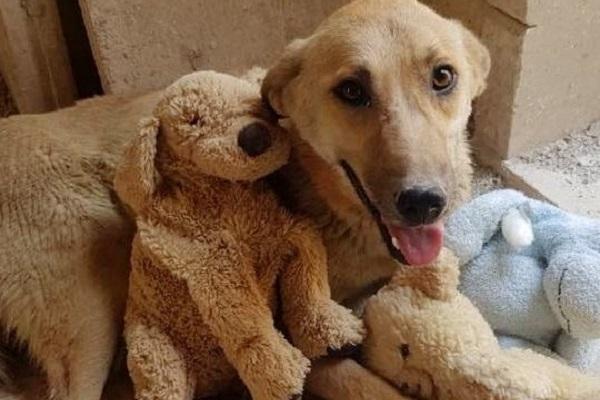 cane con peluche