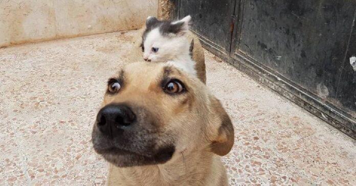 cane con gatto sulla schiena