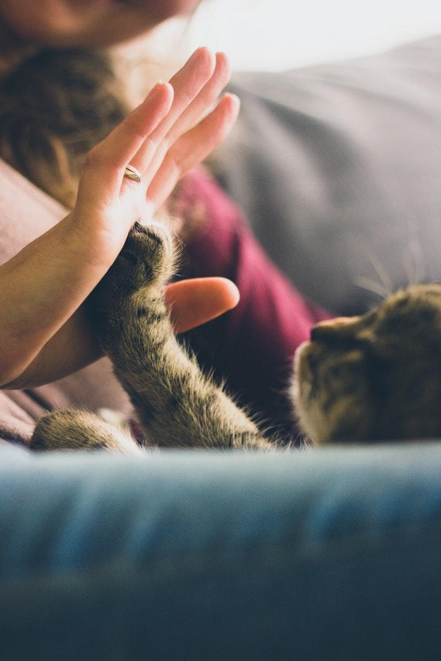 gatto-pipi