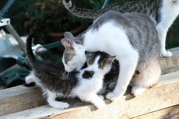 gatto preso per collottola