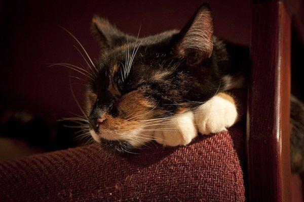 gattino dorme