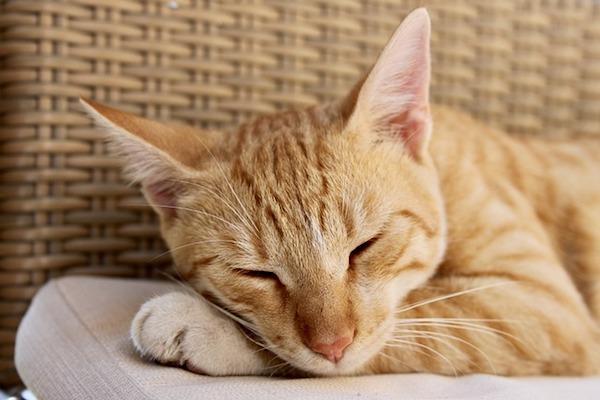 gatto si riposa