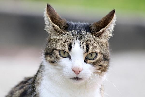 gatto dolce