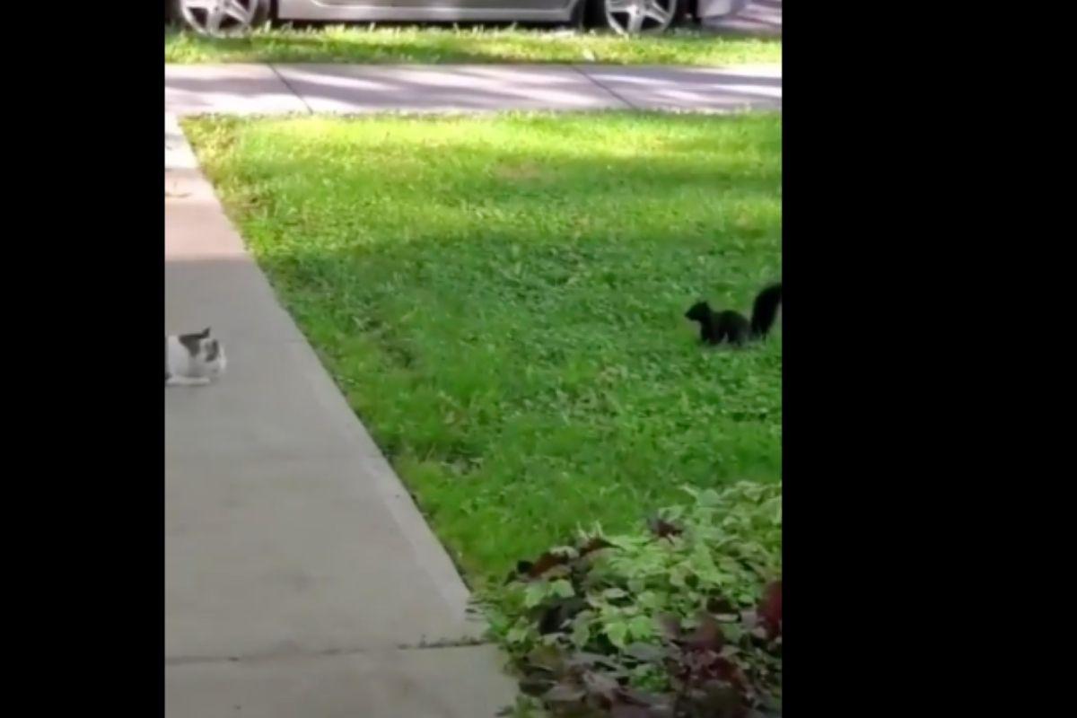 gatto e scoiattolo