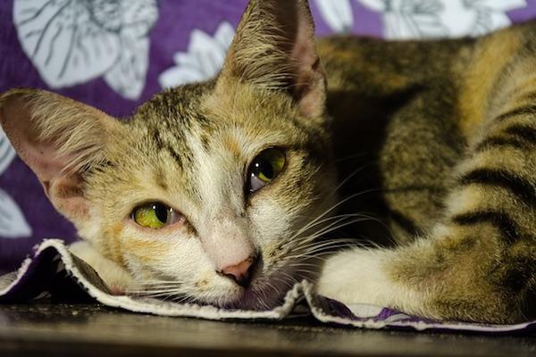 gatto malato dieta casalinga
