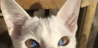 gatto-olive