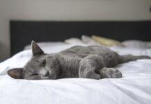 perchè-gatti-fanno-pipì-letto