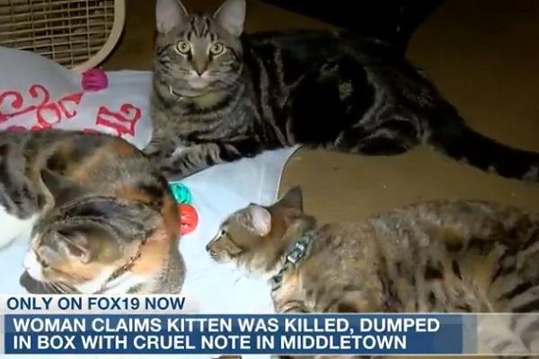 gatto ucciso in ohio