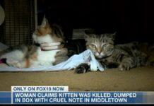 i fratelli del gatto ucciso a Butley County