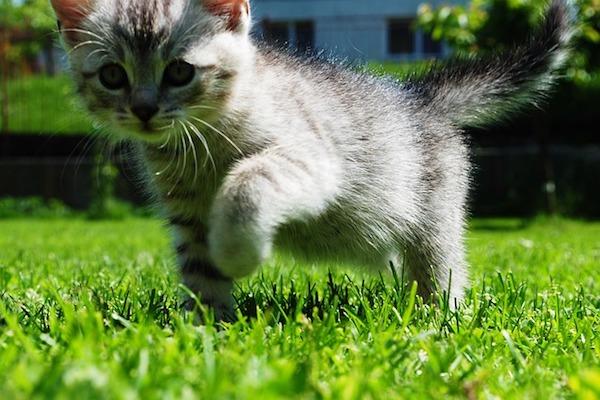gattino zampa rotta zoppica