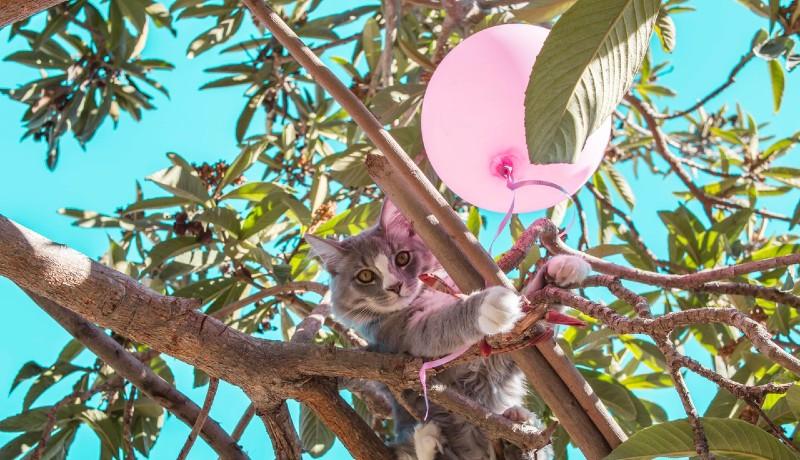Gatto sull'albero